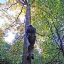 Certificate in the Thorough Examination of Arboricultural Equipment